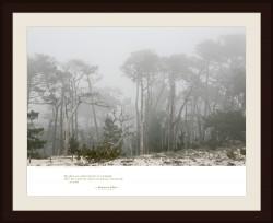 SAND AND CYPRESS TREES — Carmel, California
