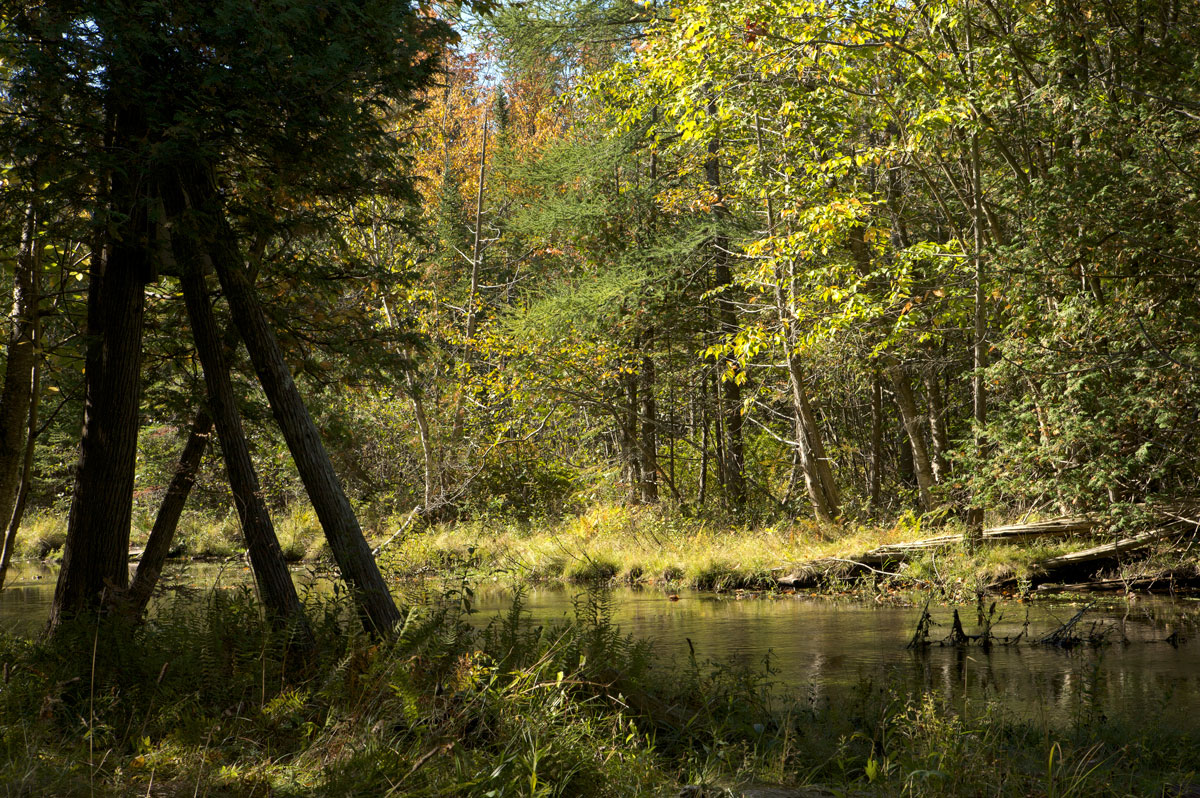 Photo of Horton Creek Nature Preserve — Horton Bay, Michigan