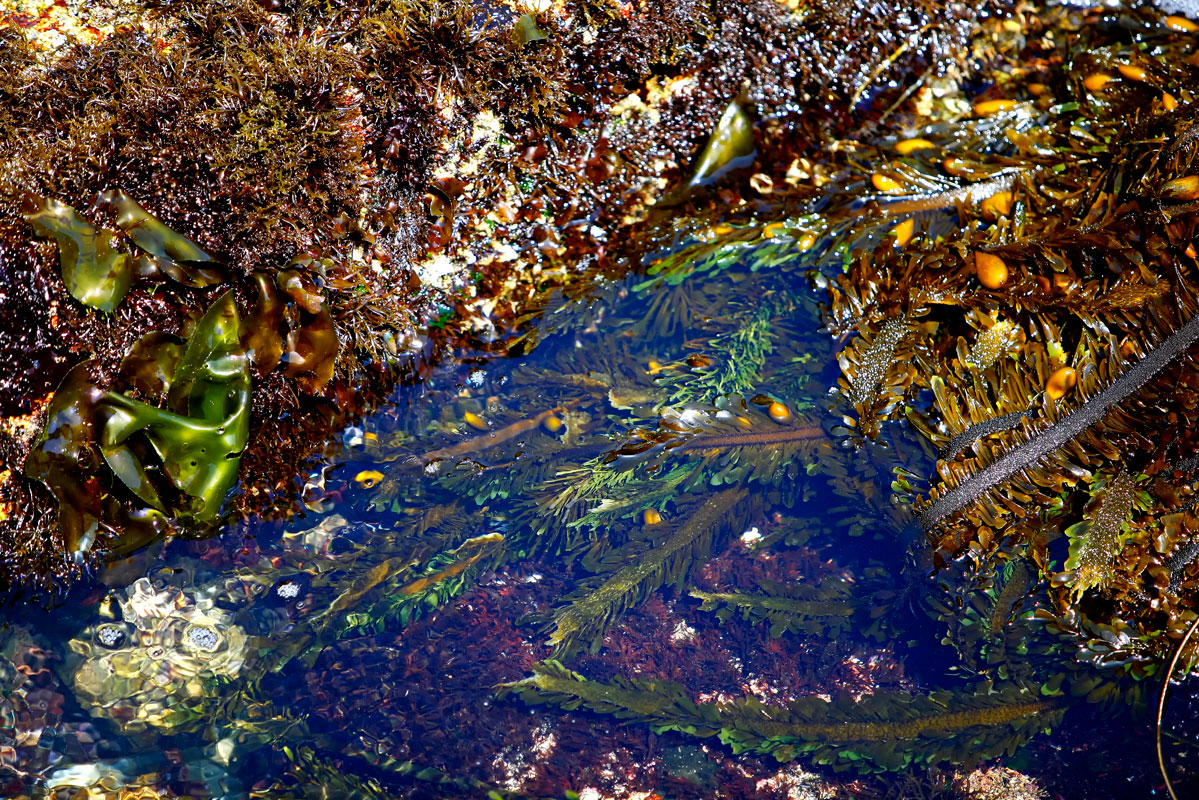 Photo of Tidepool in Pacific Grove