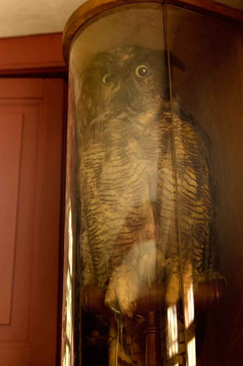 Photo of stuffed owl at the Old Manse — Concord, Massachusetts