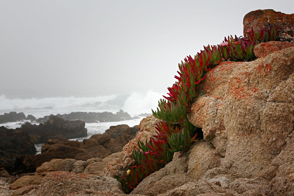 Photo of blood-red lichen along the Carmel coast — Carmel, California