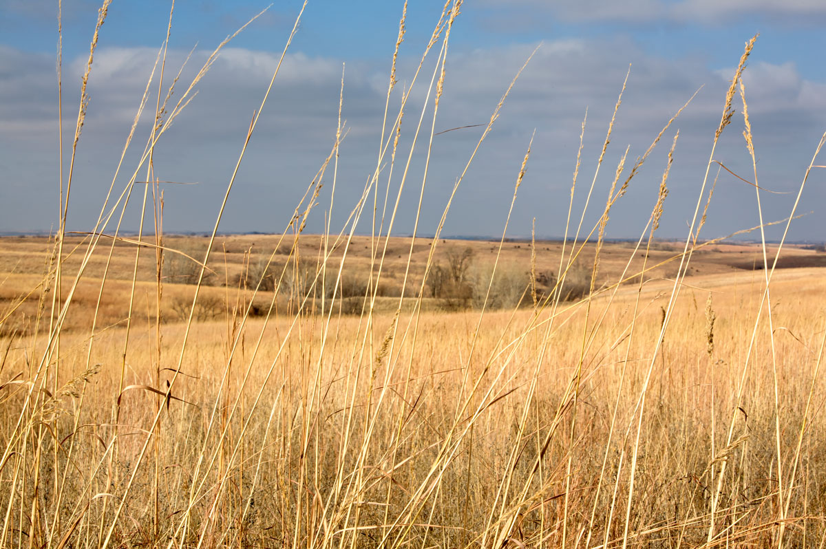 Photo of Willa Cather Memorial Prairie